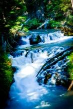 higgboson stream-